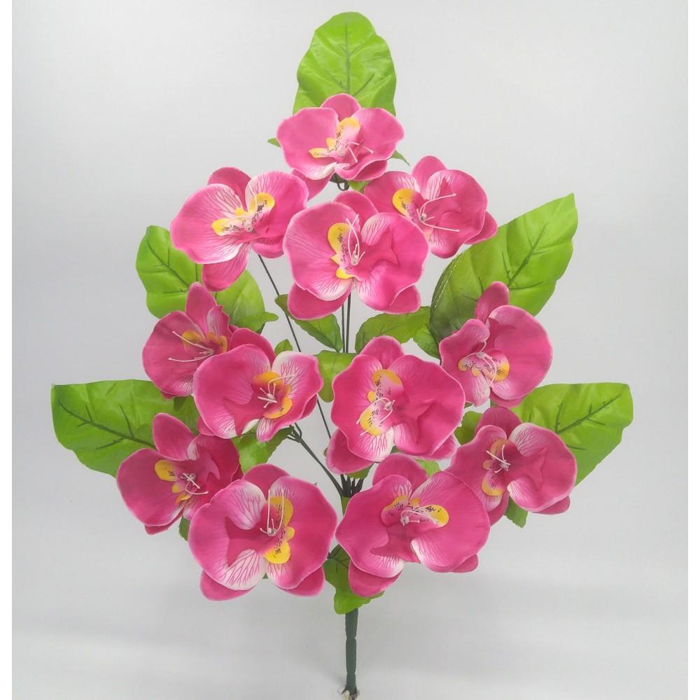 Купить цветы орхидеи оптом дешево доставка цветов саудовская аравия
